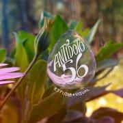Antídoto 56
